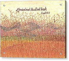 Bruised Reed Acrylic Print by Catherine Saldana