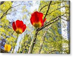 Bryant Park Tulips New York  Acrylic Print by Angela A Stanton