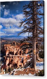Bryce Canyon 1 Acrylic Print by Marti Green