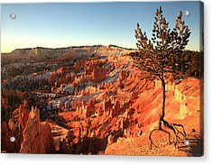 Bryce Canyon Acrylic Print by Darryl Wilkinson