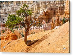 Bryce Canyon Np Acrylic Print by Juergen Klust