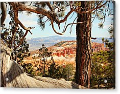 Bryce Canyon Through The Trees Acrylic Print