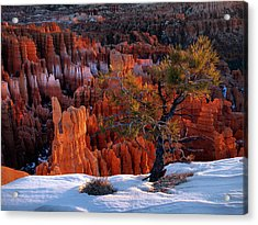 Bryce Canyon Winter Light Acrylic Print by Leland D Howard