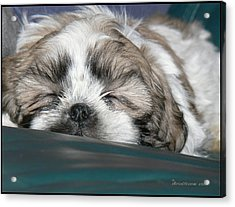Acrylic Print featuring the photograph Bubba by EricaMaxine  Price
