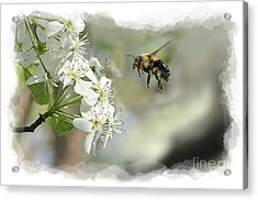 Bubble Bee Looking For Nectar Acrylic Print by Dan Friend
