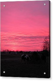 Acrylic Print featuring the photograph Bubble Gum Sunrise by Carlee Ojeda