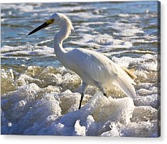Bubbles Around Snowy Egret Acrylic Print
