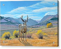 'buck Deer-tom Miner Basin' Acrylic Print by Paul Krapf