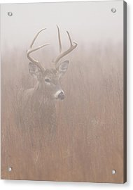 Buck In Fog Acrylic Print by Rob Graham