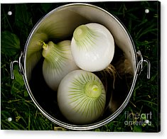 Bucket Of Onions Acrylic Print by Wilma  Birdwell