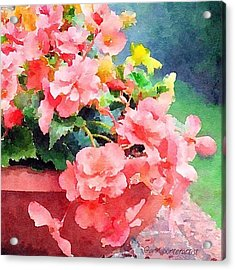 Bucket O Begonias Acrylic Print by Anna Porter
