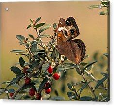 Buckeye Beauty Acrylic Print