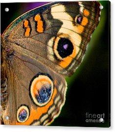 Buckeye Butterfly Wing Square Acrylic Print by Karen Adams