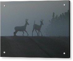 Bucks In Fog Acrylic Print