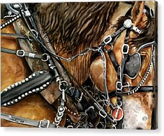 Buckskin Acrylic Print by Nadi Spencer