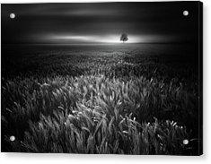 Bucolic Sunrises #2 Acrylic Print