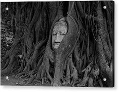 Buddha Head In Roots Of Bodhi Tree Acrylic Print by Zestgolf