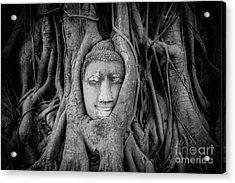 Buddha In The Banyan Tree Acrylic Print