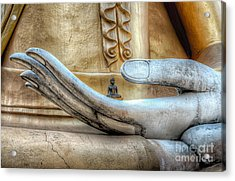 Buddha's Hand Acrylic Print by Adrian Evans