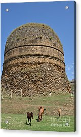 Buddhist Religious Stupa Horse And Mules Swat Valley Pakistan Acrylic Print by Imran Ahmed