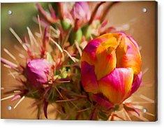Budding Cactus Acrylic Print