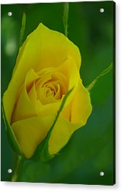Budding Happiness Acrylic Print by Rima Biswas