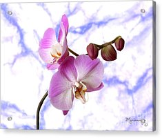 Budding Orchids Acrylic Print by Mariarosa Rockefeller