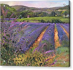Buddleia And Lavender Field Montclus Acrylic Print by Timothy Easton