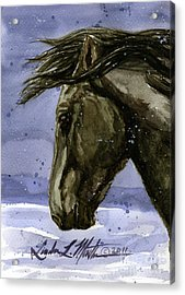 Buddy Bachelor Stallion Of Sand Wash Basin Acrylic Print