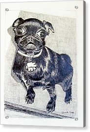 Acrylic Print featuring the drawing Buddy by Jamie Frier