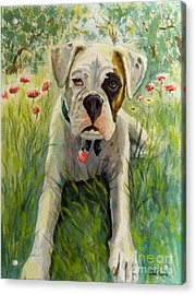 Buddy The Boxer Acrylic Print