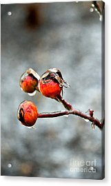 Buds On Ice Acrylic Print