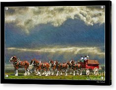 Budweiser Clydesdale Paint 2 Acrylic Print
