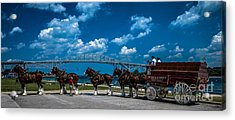 Budweiser Clydsdales And Blue Water Bridges Acrylic Print