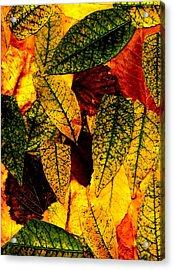 Buenos Aires 6 Acrylic Print by Horacio Carrena