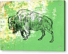 Buffalo 11 Acrylic Print
