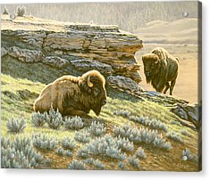 'buffalo At Soda Butte' Acrylic Print