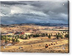 Acrylic Print featuring the photograph Buffalo Before The Storm by Bill Gabbert