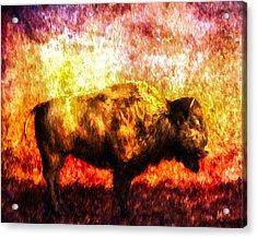 Buffalo Acrylic Print by Bob Orsillo