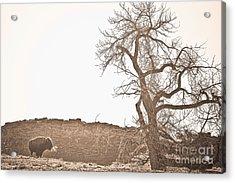 Buffalo Breath Acrylic Print by James BO  Insogna