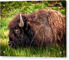 Acrylic Print featuring the painting Buffalo Cat Nap by Michael Pickett
