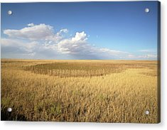 Buffalo Gap National Grassland Acrylic Print by Peter Falkner/science Photo Library