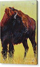 Buffalo Girl Acrylic Print