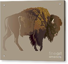 Buffalo. Hand-drawn Illustration Acrylic Print by Imagewriter