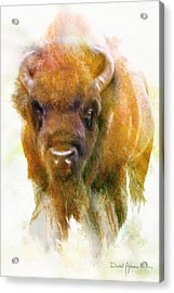 Da176 Buffalo II Daniel Adams Acrylic Print