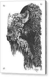 Buffalo In Spring Acrylic Print