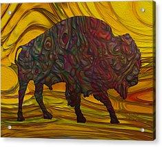 Buffalo Acrylic Print by Jack Zulli