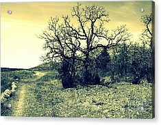 Buffalo Trail Acrylic Print by Mickey Harkins