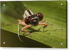 Bug Eyes Acrylic Print by Jean Noren