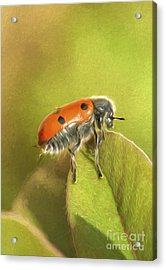 Bug On Leave Acrylic Print